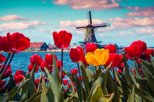 Parada Kwiatów 2018